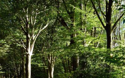 Liaisons écologiques pour le territoire de la commune de Silly